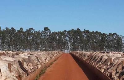 Los frigoríficos brasileños urgen importar ganado desde Paraguay