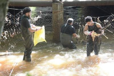 Refuerzan trabajos de limpieza en el arroyo Amambay