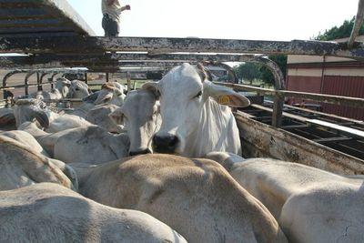 Continúa la baja oferta de gordo y el mercado registra nueva suba de precios