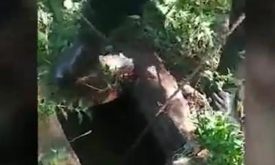 Macabro hallazgo en Santa Rita: Encuentran restos óseos en una fosa
