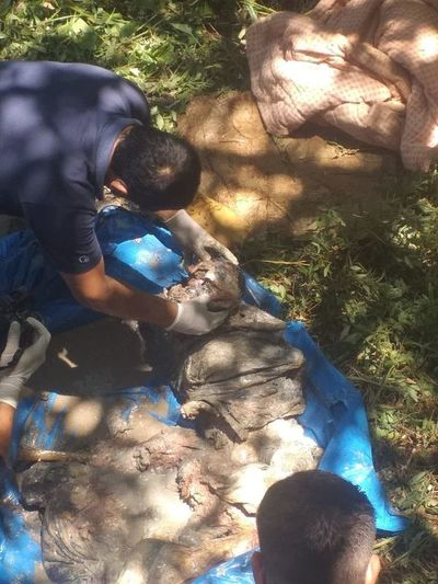 Hallan restos óseos en Santa Rita