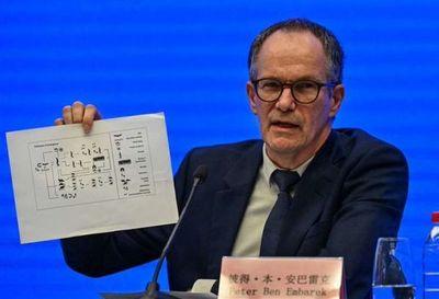 Misión de OMS en China no halla por ahora datos contundentes sobre origen del covid-19
