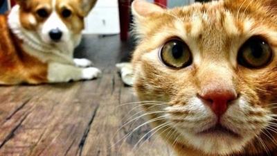 HOY / Corea del Sur: Test para mascotas con síntomas de COVID-19 y cuarentena para las que dan positivo