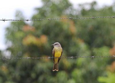 Sumate a esta iniciativa contando las aves de tu jardín