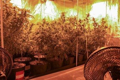 """Hallan marihuana del PCC en invernaderos """"indoor"""""""
