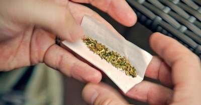 La Nación / ¿Cannabis recreativo legal?: ministra de la Senad insta a diálogo nacional