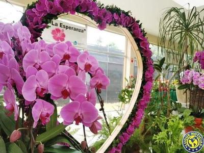 Feria de orquídeas para enamorados •