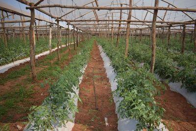 Agrogandera  CampoBull diversificación constante