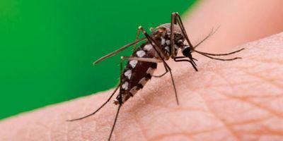 Dengue: 96 casos confirmados y 2.935 notificaciones de sospechas a nivel país