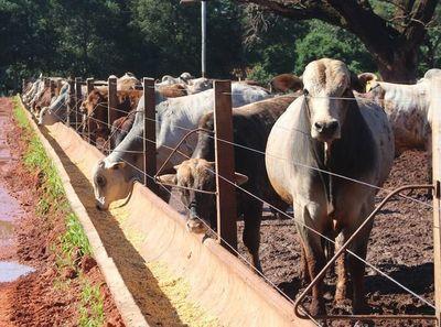 """Industria sobre el precio del ganado gordo: """"Parece que llegamos al techo"""""""