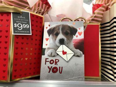 El amor por los perros transforma San Valentín