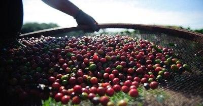 La Nación / El café, un sobreviviente de la pandemia