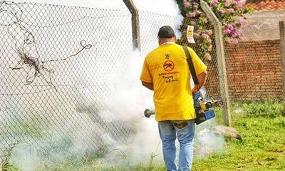 Dengue: 537 notificaciones de casos sospechosos por semana