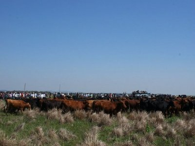 Preocupa a productores de Brasil importación de ganado