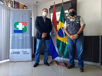Analizan protocolo para exportar ganado en pie al Brasil