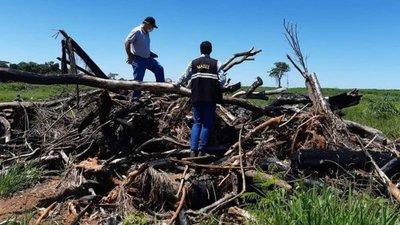 Siguen desmontes en Región Oriental pese a Ley de Deforestación Cero