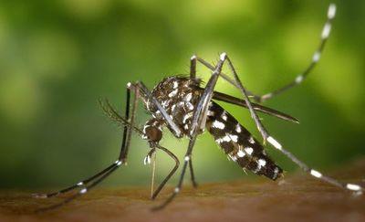 Salud alerta  aumento del peligroso dengue serotipo 2
