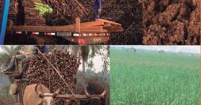 La Nación / Analizan producción de la caña de azúcar