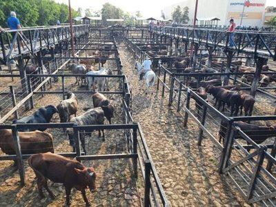 Venta de animales en ferias de consumo aumentó 3,5% y confirma una tendencia alcista