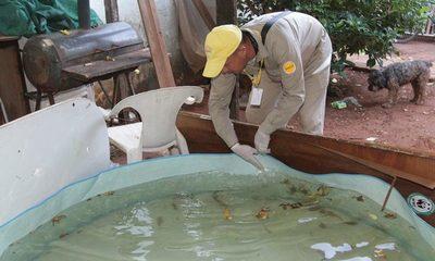 Aumentan casos de dengue del serotipo DEN-2, uno de los más agresivos