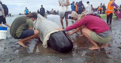 La Nación / Decenas de ballenas piloto, varadas en Nueva Zelanda