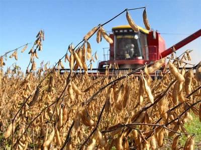 Agricultores están optimistas con el panorama de rindes de la soja