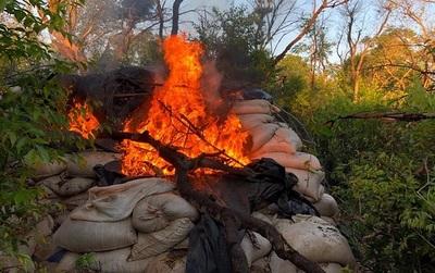 SENAD incautó más de 30 toneladas de marihuana en Capitán Bado