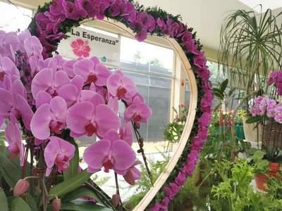 Expo orquídeas hasta el Día de los Enamorados