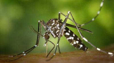 Circula uno de los serotipos más agresivos de dengue
