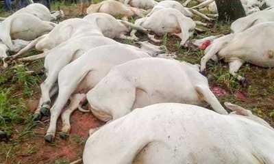 Rayo mata a 54 animales vacuno