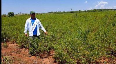 Fumigación de soja contamina producción orgánica y hunde a pequeños productores de San Pedro