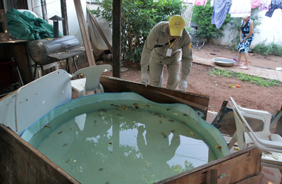 """Cuando lo obvio no es tenido en cuenta: piscinas fácilmente son """"hoteles"""" para el mosquito transmisor del dengue"""