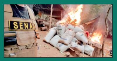 DESTRUYEN 200 TONELADAS DE DROGA EN AMAMBAY