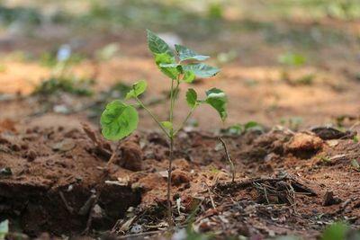 Sumate a la iniciativa que cuida nuestros bosques