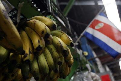 Costa Rica aumentó las exportaciones de banano en un 7 % pese a la pandemia