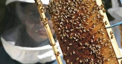 La Nación / Un agrotóxico vetado en Europa aniquila a las abejas en Colombia