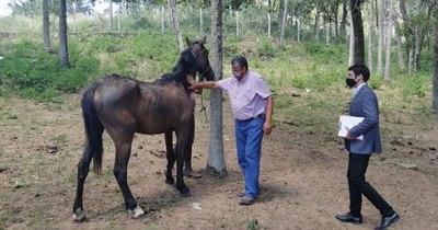 La Nación / Defensa Animal rescata dos caballos maltratados en San Bernardino