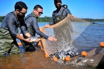 Siembran unos mil peces juveniles de surubí en el embalse de Itaipu