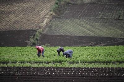El IICA y la ONU destacan el papel de América Latina en los sistemas alimentarios