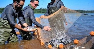La Nación / Siembran 1.000 peces de surubí en embalse de Itaipú