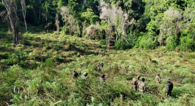 En primera semana del operativo «Nueva Alianza XXIV» se destruyeron 1.090 toneladas de marihuana