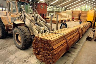 Buscan potenciar exportaciones forestales a Taiwán