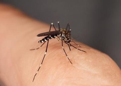 Dengue: Salud confirma más de 350 casos y 700 sospechosos