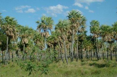 Invasores amenazan a guardias y ponen en riesgo 30.000 hectáreas de reserva  boscosa en el Chaco
