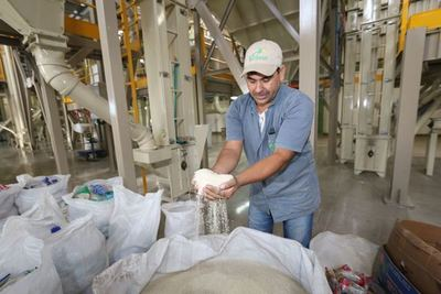Paraguay ajusta detalles para exportar arroz a Cuba desde la próxima semana