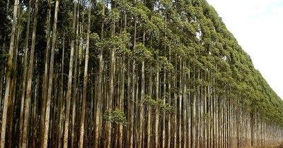 La Nación / Sector forestal exportó 9.249 toneladas a 32 destinos en el primer mes del año
