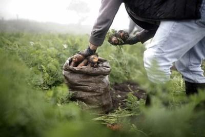 Agricultura regenerativa: producción de alimentos con conciencia ambiental