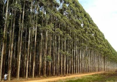 Sector forestal exportó a 32 destinos en enero