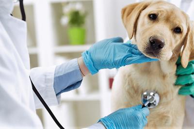 """APROVET repudia actividad negligente e irresponsable de personas bajo título de """"veterinarios"""" – Prensa 5"""