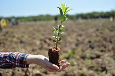A Todo Pulmón realizará plantaciones de árboles nativos por el Día Internacional de los Bosques
